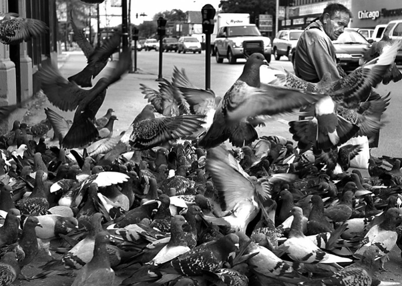 "Joseph Zeman, also known as the ""Pigeon Man"" of Logan Square, sits with his birds on the corner of Lawrence and Western avenues in Chicago. Zeman was hit by a car and killed on Dec. 18, 2007."