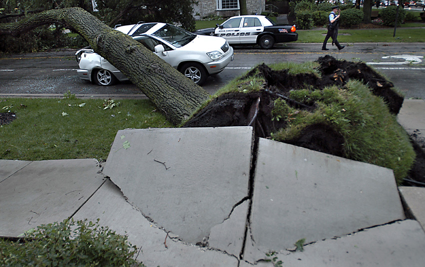 An uprooted tree in River Forest, Ill., crushed the back of Forest Park resident Larry Warner's car while he drove south on Lathrop Avenue during a storm. No one was injured.