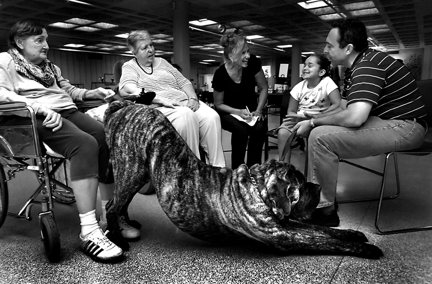 Titan the therapy dog stretches before walking the halls of the Winchester House, a long-term health care facility owned by the Lake County government in Libertyville.  Shown from left to right, resident Gloria Omahana, resident Monica Behnke, Volunteer Coordinator Mary Purnell, and owners Nicole and Ed Benyukhis.